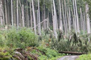 Lesní úřad vyhlásil zákaz vstupu do lesů VLS na Šumavě