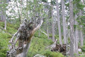 Šumavská divočina stále láká, návštěvnost národního parku stoupá