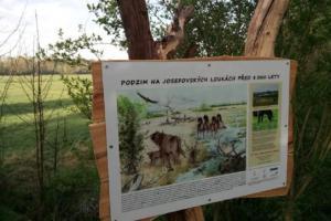 """Ornitologové zpřístupnili """"Josefovskou džungli"""" v ptačím parku"""