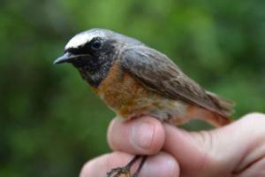Komentovaná ornitologická vycházka Vítání ptačího zpěvu 2019