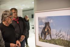 Výstava v centru Prahy přibližuje velké kopytníky v rezervaci u Milovic a Benátek