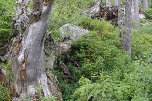Vstup do Národní přírodní rezervace Boubín je uzavřen