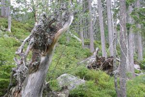 Aktuální průchodnost turistických tras v oblasti Stožce a Nové Pece