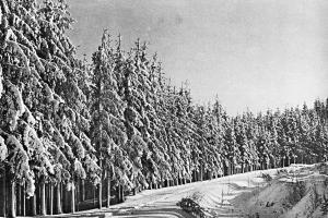 Zima – bílá krasavice
