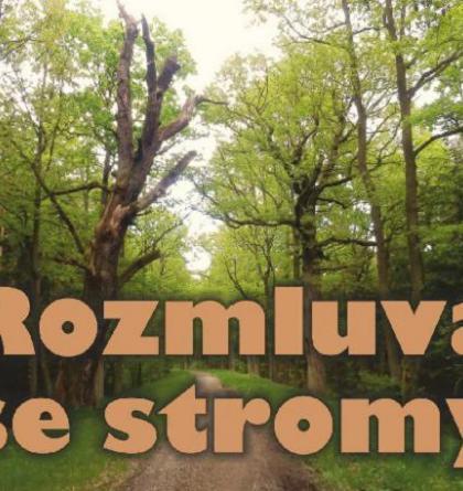 Jak se rozmlouvá se stromy