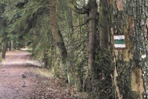 Turistické značení zlikvidované kůrovcem projde obnovou