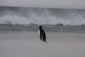 """Přednáška """"Falklandy – země plná paradoxů na konci světa"""" v chebském muzeu"""