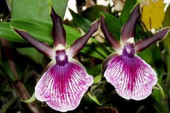 Výstava ORCHIDEJÍ, bromélií, sukulentů, jiných exotických rostlin