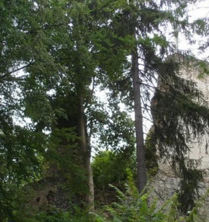 Hrad Pajrek má největší donjon v Čechách
